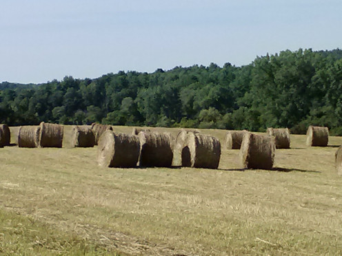 Huge Round Bails of Hay waiting...