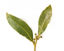 Bay Leaves or Bay Laurel  are widely used in Mediterranean cooking. Be sure to remove the leaves and not serve them to a diner