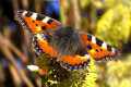 Learn about butterflies and moths