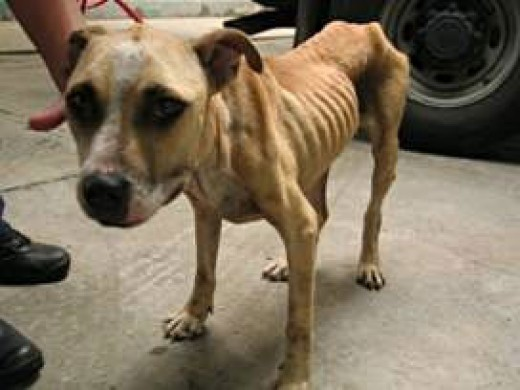 animal_cruelty_starved from jen. boucher  flickr.com