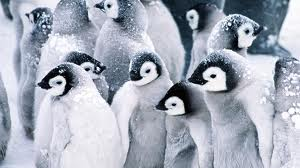 Penguins are the best adapted animals to extreme cold. Their thick fur doesn't allow any heat loss. They recovers 80% of heat and moist loss through respiration through a complex heat exchange system, called  'rete mirabile', in their nasal passages.
