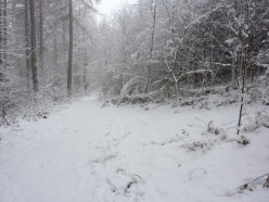 The Deathly Woods in Winter - A Short Story