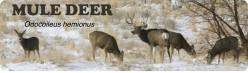Mule Deer: Utah's most popular big game animal