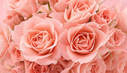 Lovely as a rose, sweet smelling, brightens up a room, amazingly beautiful...that's how I would describe a long and lasting relationship...a marriage! A rose must be handled with care... unless you want to feel the thorns... as in love relationships.