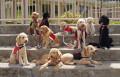 Converting Dog Years To Human Years: The New Math