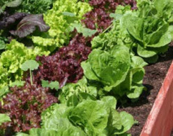 The Importance of Buying and Eating Organic Food