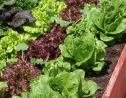 Eating leafy greens can make you fat by disrupting your hormones! Not the greens but from the fungicide, triflumizole, added to it. See NY Times article below.