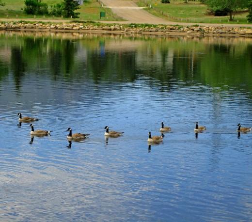 Love ducks!