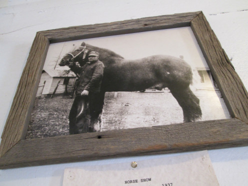 This is a photograph of a picture taken at the 1937 Henry County Fair. It depicts Art Cordes, a mover and shaker who helped establish the Henry County Draft Horse Association, with a prized stud.