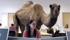 Guess what day it is on Wednesday?