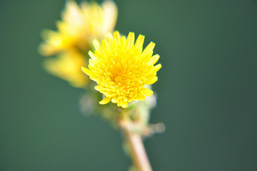 Close Up Flower from Carel Ruigrok  flickr.com