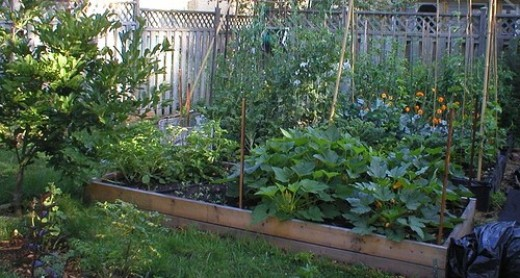 You too can grow your own backyard vegetable garden