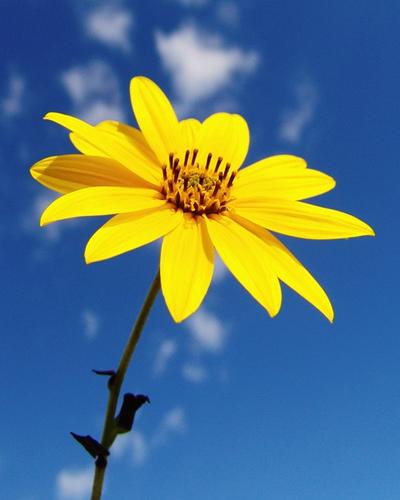 a yellow flower from svarun63  flickr.com