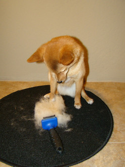 Shedding In Dogs and Cats