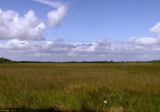 Sawgrass Prairie in the Everglades, Florida