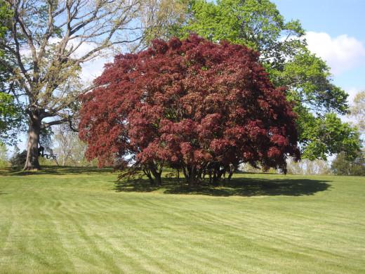 Wickham Park in Autumn