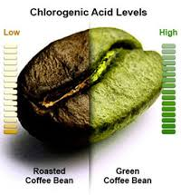 Chlorogenic acid Levels of a Green Coffee Bean