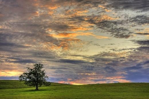 One Tree, One Sky from Matt Champlin  flickr.com