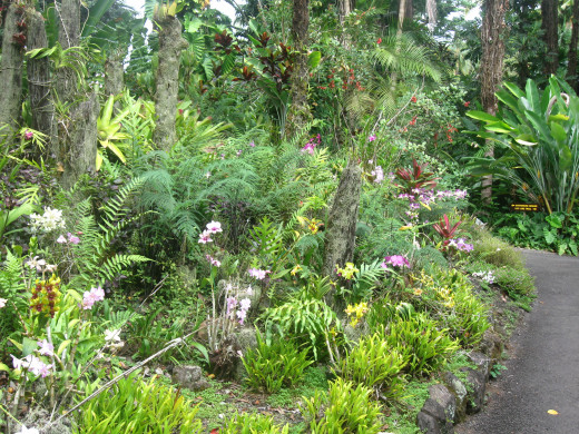 Scene along trail in Hawaii Tropical Botanical Garden Nature Preserve