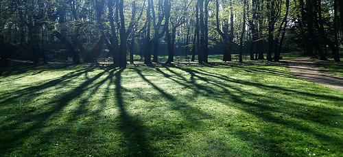 sunlight from Jan Kwiatkowsky  flickr.com