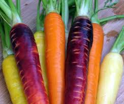 Coloured carrots provide even more nutritional diversity and colour to your plate