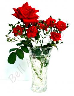 Roses: Maintenance