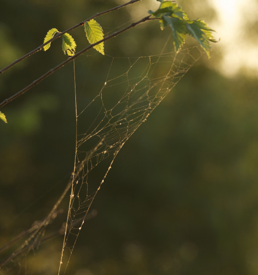 Backlit Spider Web