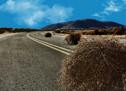 A Tumbleweed in the Wind