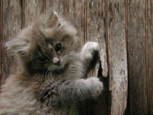 Kittens are adorable, and a lifetime commitment