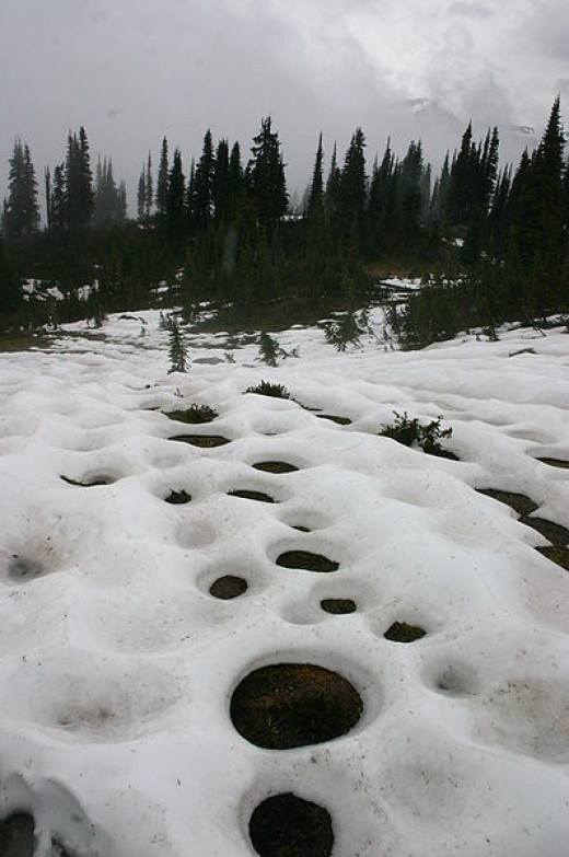 In Spring, new vegetation gives off heat to melt its surrounding snow, creating this circular pattern of snowmelt.