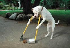 TRAIN YOUR DOG FOR THIS OR GET A DOG WHICH WILL DO THIS IN MALLESWARAM.