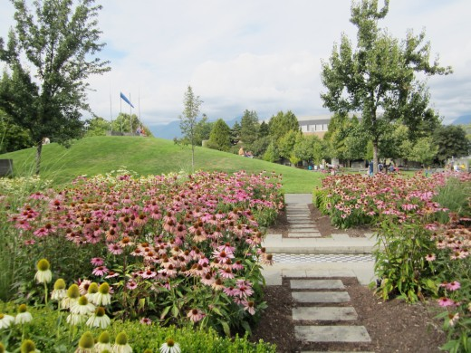 Another view of the Italian Gardens; the purple flowers are purple coneflowers and the white ones are white coneflowers