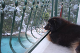 Our dog Benda, enjoying and observing the beautiful surroundings, Uvala Liubljeva, Croatia