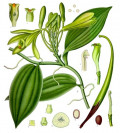 Vanilla: The Last of The Aztec Treasures