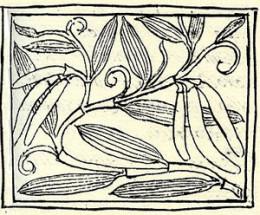 Vanilla referenced in the Florentine Codex.
