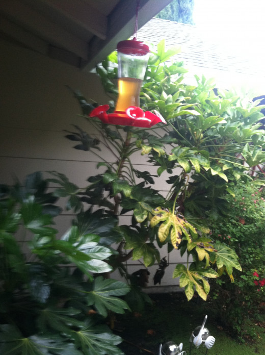 A Cedar Works Sipper Hummingbird Feeder that I hung in my front patio area.