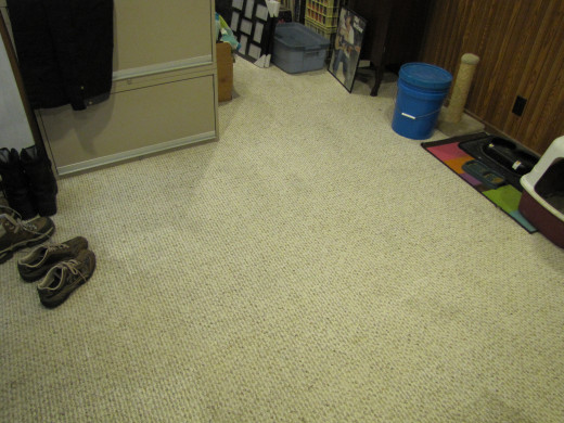 Pet Stains Cleaned From Carpet