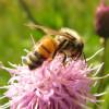 BeeList profile image