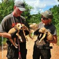 Unchained -10 Ways to Indentify Dog Fighting in Your Own Neighborhood