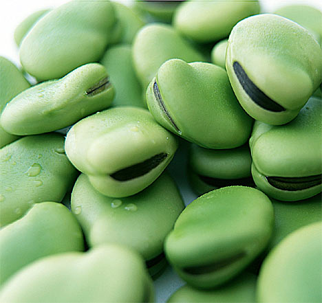 Broad beans, a useful seed to use in classes.