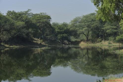 San Jay Van- New Delhi