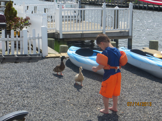 My grandson feeding the ducks.