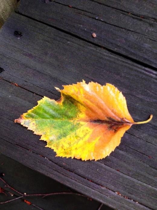 A falling leaf on my deck