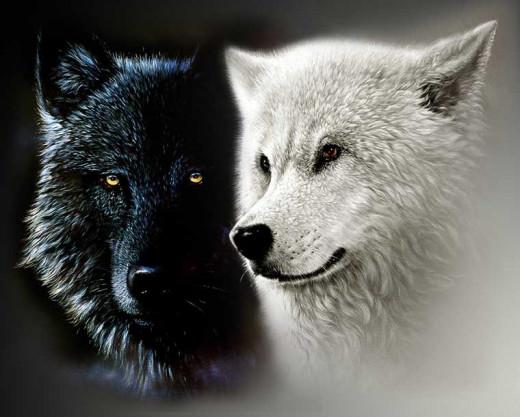 My Black Wolf