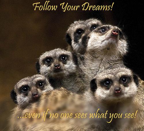 Follow Your Dreams from Allan Davis  flickr.com