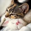 topclasscat profile image