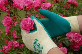 Wear gloves while gardening.