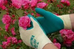 Wear gloves while gardening.