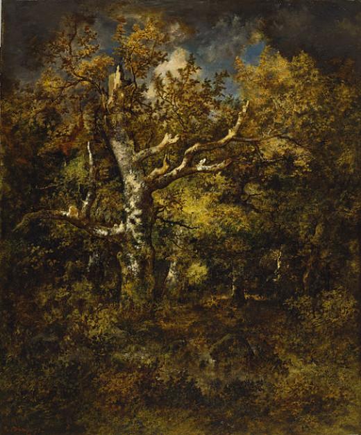 Forest of Fountainebleau Oak - a beautiful oak tree example not the Jack London oak