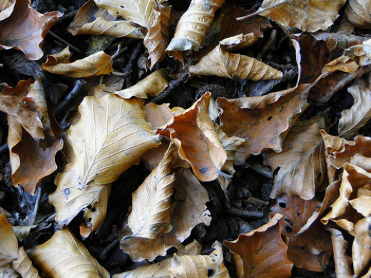 Crunchy leaves from John Coyne flickr.com